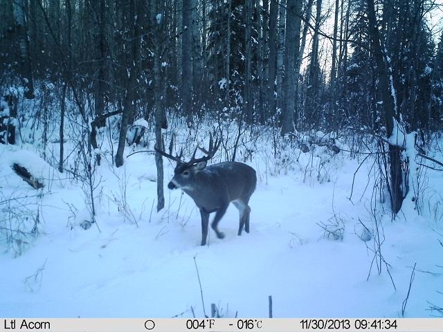how to play buck buck moose