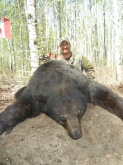 2013 Alberta Black Bear Hunts