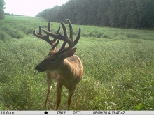 Alberta Whitetail Deer Trail Camera Pictures 2014