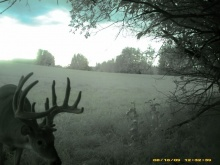 Alberta Whitetail Deer Trail Camera Pictures 2009