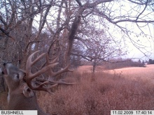 Alberta Whitetail Deer