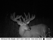 Alberta Whitetail Deer Trail Camera Pictures 2010