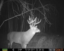 Alberta Whitetail Deer Trail Camera Pictures 2011